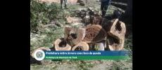Árvore com risco de queda